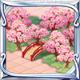 桃宴の庭木.PNG